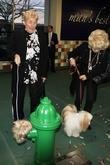 rip taylor guest grand opening of the pooch hotel l