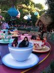 Tom Cruise and Disneyland