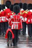 St Patrick's Day military parade at Mons Barracks
