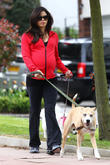 pregnant jenna dewan-tatum walks her dogs near her 130513