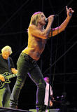 Iggy Pop Hopes For Shark Attack Death