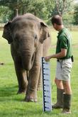 Donna, Asian Elephant and Darren Fellows