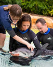 Discovery, Newborn Dolphin Calf and Florida