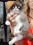 MTV and Grumpy Cat