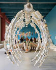 The Washed Ashore Project and Giant Sea Sculptures