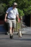 Taronga Zoo Penguin Has and Happy Feet