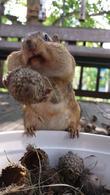 Squirrel Cam