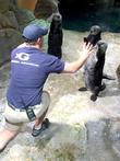 Chris Pratt and Georgia Aquarium
