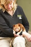 World First Surgery Saves and Baby Kangaroo Life