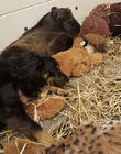 Blakely The Australian Shepherd, Nursery Dog Takes Care, New Baby Takin and Cincinnati Zoo